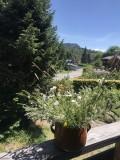 fleurs-des-champs-sur-la-rampe-du-balcon-appt-de-gauche-6061292