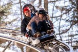 luge-lc-24-03-2019-060-4708922