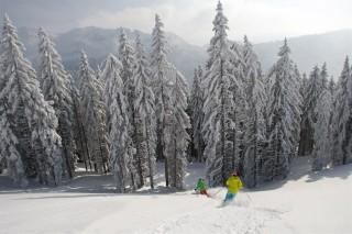 ski-hors-piste-sapins-cervos-71661